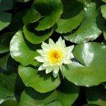parc-floral8-150x150